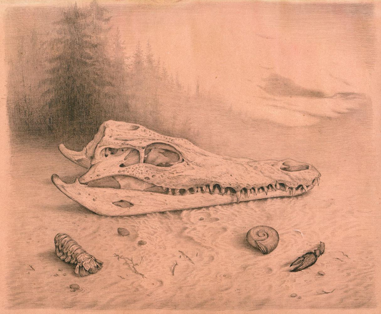 """""""Krokodilschädel"""", Bleistift auf getöntem Papier, 2015"""